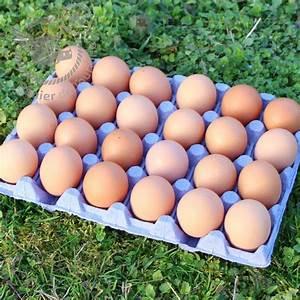 Comment Reconnaitre Des Oeufs Frais : 24 oeufs frais de poules lev es en plein air calibre moyen 53 63g ~ Louise-bijoux.com Idées de Décoration