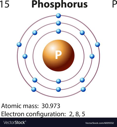 Phosphorus Protons by Diagram Representation Of The Element Phosphorus Vector Image