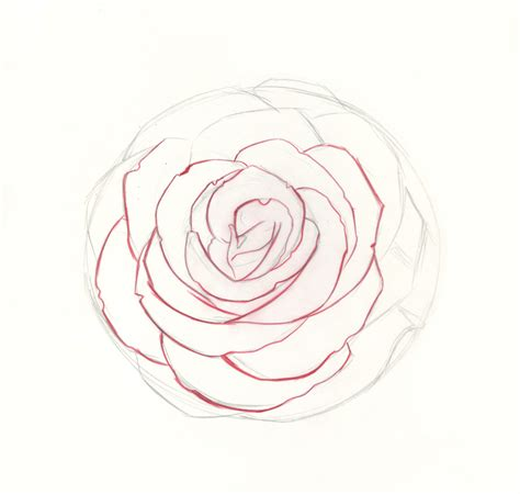 draw roses  beginner step  step demo
