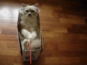 cats in boxes 15 cats in boxes amazing creatures
