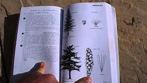 Peterson Field Guide To Edible Plants - Review