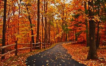 Autumn Pretty Road Nice Leaves Coffee Colors