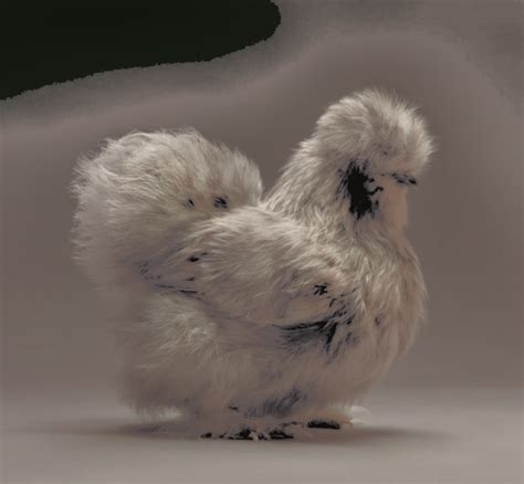 portraits   beautiful chickens   planet