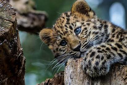 Leopard Cat Wallpapers Dog Africa