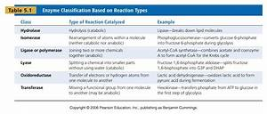 Enzyme Classification with examples | biochembayern