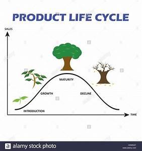 Tree Life Cycle Diagram Stock Photos  U0026 Tree Life Cycle