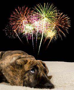 4th of July pet safetyState of Delaware News | News from ...