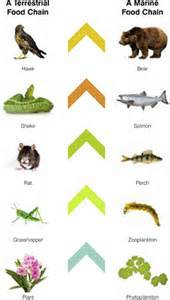 Food Chain Models for Kids