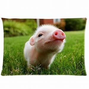 Baby Pigs  Amazon Com