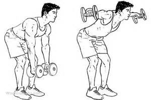 Rear Pec Deckbent Over Lateral Raises by Dumbbell Bent Over Lateral Rear Delt Raises Flyes Spor