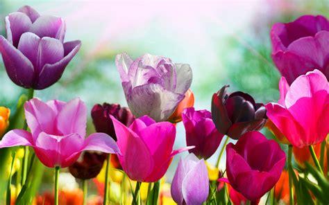Spring Into Colour!  Waxman Ceramics