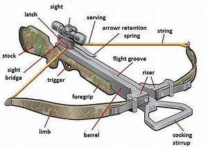 Learn About The Various Types Of Bows