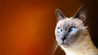 Funny Animals Cats Eyes Wallpapers Entertainment Desktop