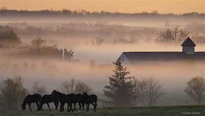 Country Desktop Backgrounds Sunrise Horses Fog Wallpapers