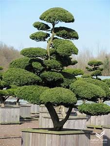 Bonsai Garten Hamburg : bonsai pflanzen bonsai pflanzen pflege und tipps mein sch ~ Lizthompson.info Haus und Dekorationen