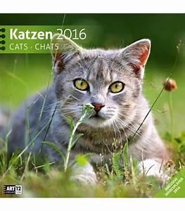Katzen In Mietwohnung 2016 : n st nn kalend ko ky katzen 30 x 30 cm 2016 ~ Lizthompson.info Haus und Dekorationen