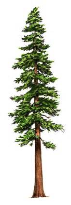 Tall Artificial Christmas Trees