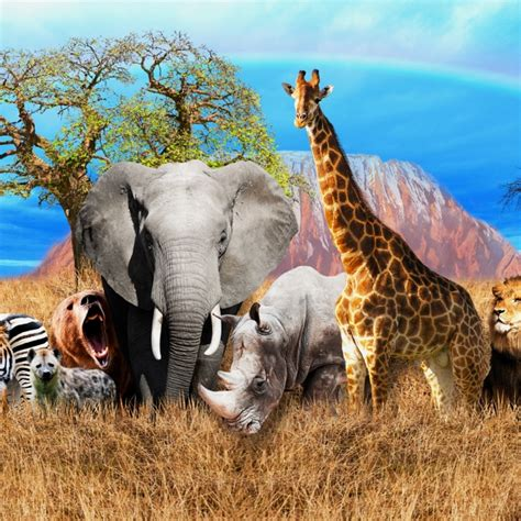 Animals Of Africa And A Domestic Cat Leave The Heat 3D