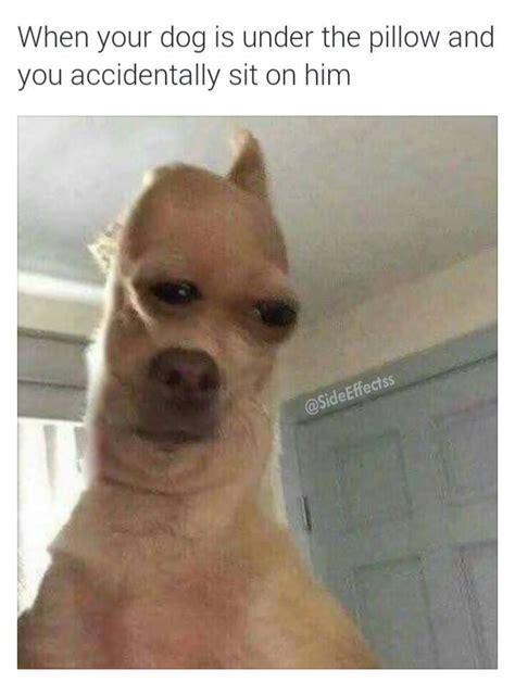 Funny Dog Face Meme - pinterest akermoade funny stuff pinterest memes dankest memes and humor