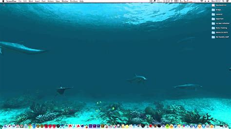dolphin animated wallpaper  mac  displays youtube