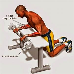 The Four Best Forearm Exercises