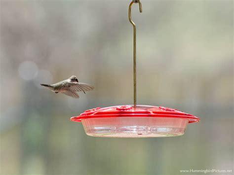 hummingbird feeders hummingbird pictures