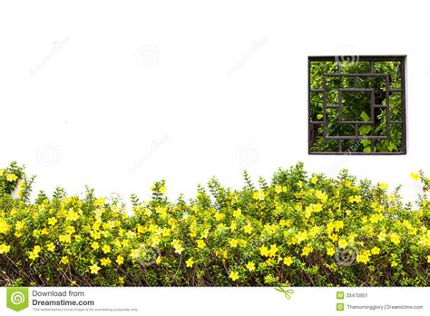 Yellow And White Meadow Flower : Meadow Yellow Flower Stock Image