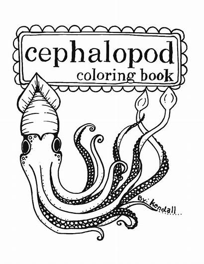 Coloring Squid Pages Printable Mollusc Squids Cephalopod