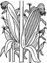Coloring Corn Vegetables sketch template