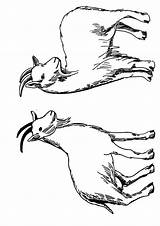Goat Coloring Goats Drawing Animals Printable Parentune Preschoolers Worksheets sketch template