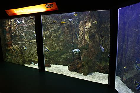 aquarium du grand lyon tarif aquarium du grand lyon tarif 28 images aquarium du grand lyon centerblog aquarium du grand