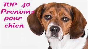 Video Pour Chien : top 40 pr noms pour chien youtube ~ Medecine-chirurgie-esthetiques.com Avis de Voitures