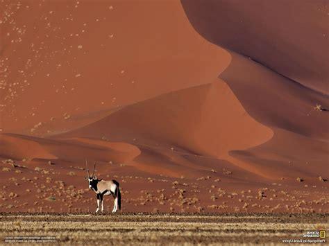 National Geographic, Desert, Sand, Dune, Animals ...