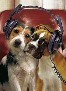 Dogs Like Music Too! - SiOWfa13: Science in Our World ...