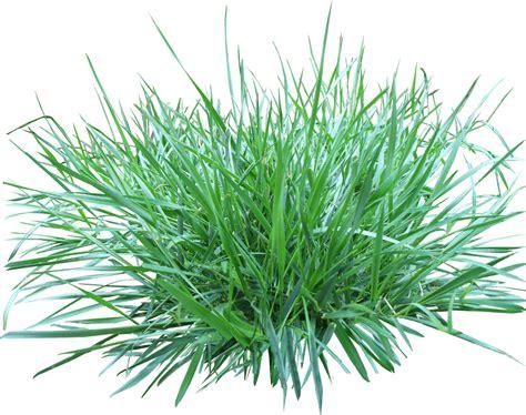 Patch Of Grass Transparent Png