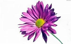 Fond D39cran 245 Fleur En Cours De Vote 245 Fleur