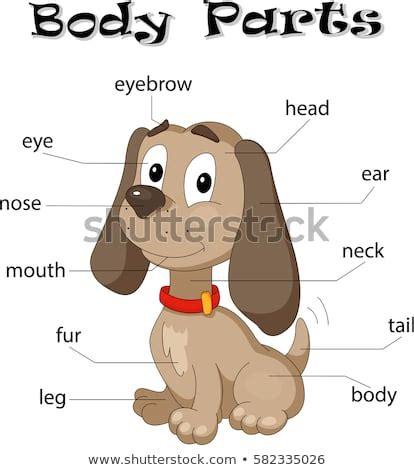 cute cartoon dog vocabulary  body stock photo