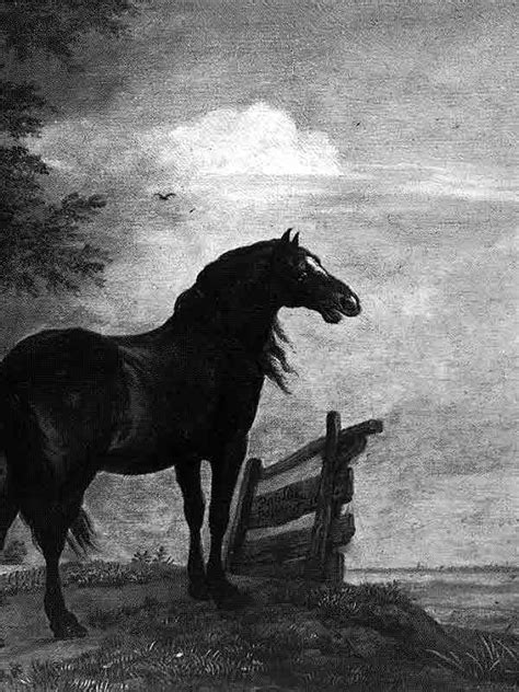 horse wallpaper  kindle  wallpapersafari