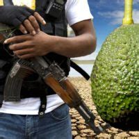 mexican drug cartels  extorting avocado farmers
