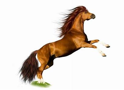 Horse Power Powerful Energy Bright Wooden Crew