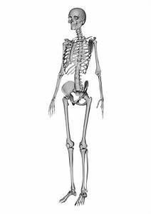 Human Anatomy Woman