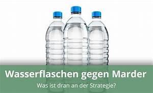 Was Hilft Gegen Marder : helfen wasserflaschen gegen marder anwendung wirkungsweise ~ Orissabook.com Haus und Dekorationen