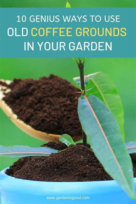 What plants do not like coffee grounds? 50 Ways to Redeem Your Balcony Space | Garden soil, Coffee grounds, Plants