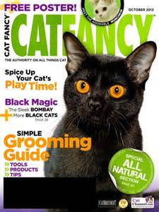 cat fancy magazine magazine daily deal of the day 10 29 cat fancy for 7 99