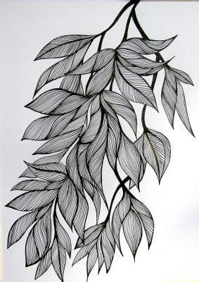 ink drawing leaves google search siv drawings