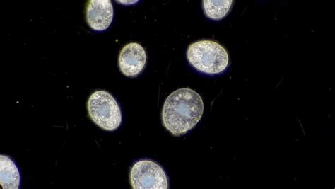 Microscopic animal Footage   Stock Clips