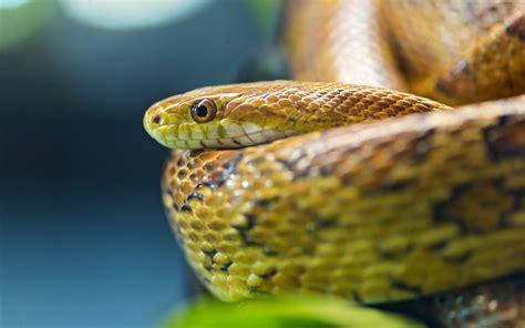 snakes photos hd - HD Desktop Wallpapers   4k HD