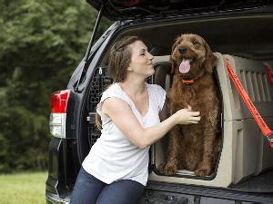 cars  dogs autobytelcom