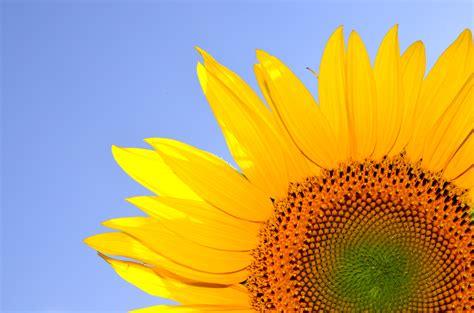 images sunshine field flower petal summer