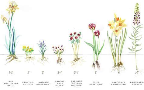 Tips Planting Fall Bulbs by Bloom Basics Tips For Planting Bulbs